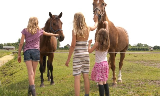 Fleur Stables | Safaritenten in Noord-Holland | FarmCamps