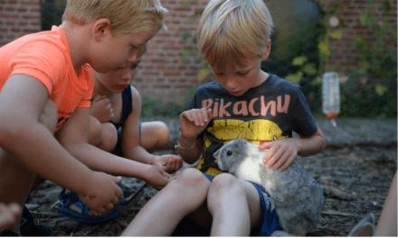 Oranjepolder | Safaritenten in Zeeland | FarmCamps