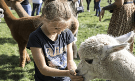 Vorstenbosch | Safaritenten in Noord-Brabant | FarmCamps