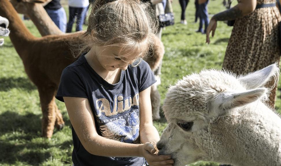 Vorstenbosch | Safaritenten in Noord-Brabant | FarmCamps