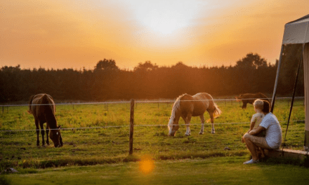 De Smulhoeve ❤ | Safaritenten in Noord-Brabant | FarmCamps