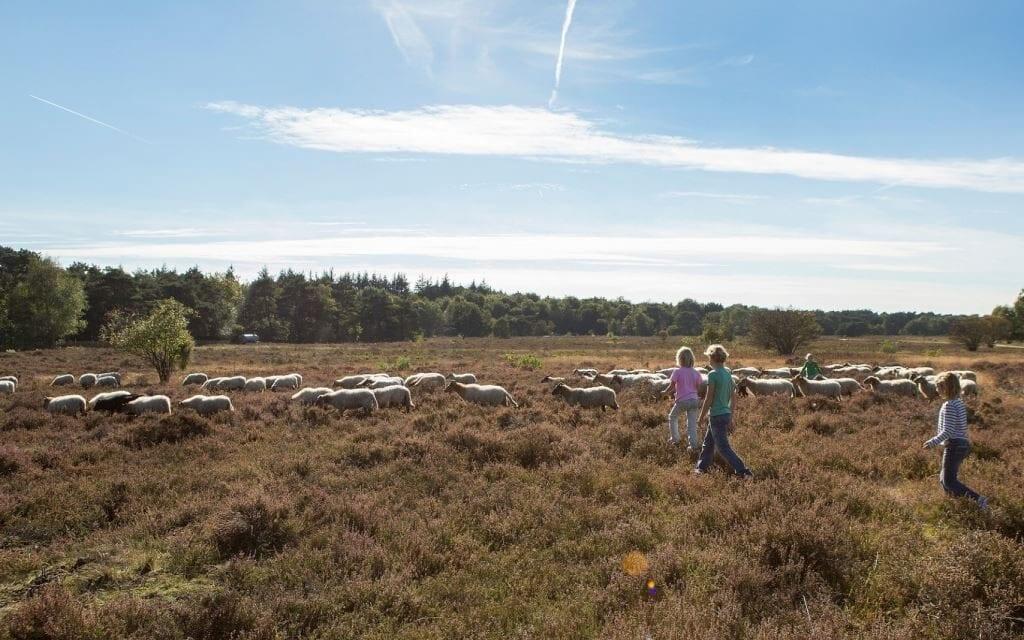 10x Kindvriendelijke vakantieparken in Drenthe