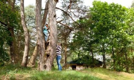 Vakantiepark Landal Coldenhove | Veluwe